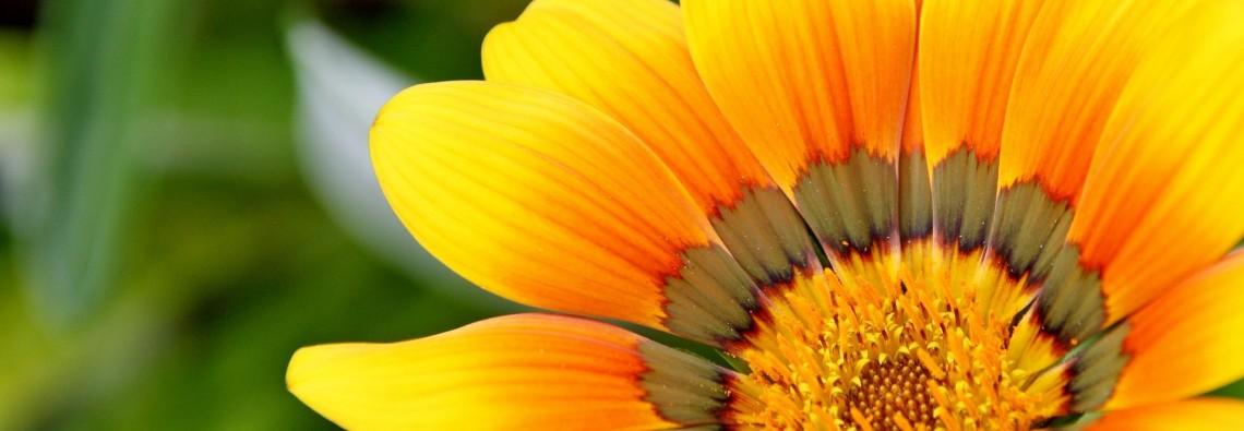 yellow-715540_1920