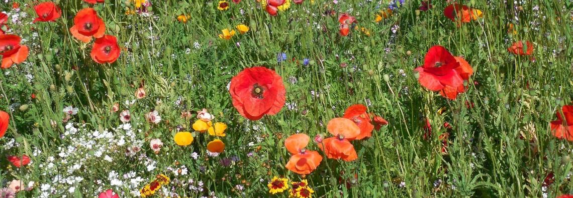 flowers-871321_1920